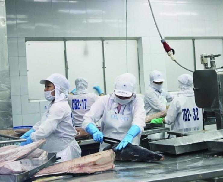 Cá ngừ Việt Nam đối mặt với nhiều khó khăn vì dịch Covid-19
